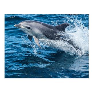 Éclaboussement de dauphin carte postale