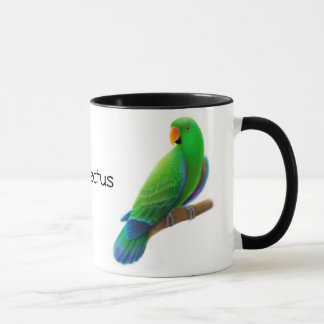Eclectus Parrots la tasse