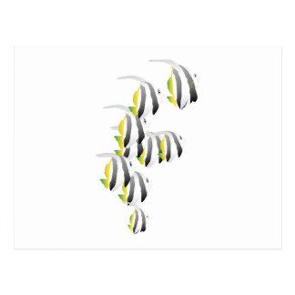 École des poissons tropicaux carte postale