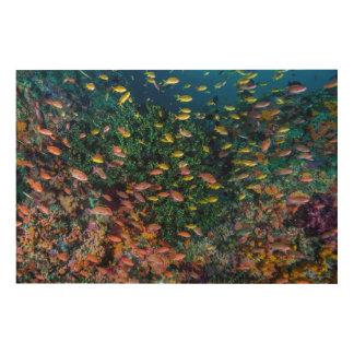 Écoles de bain de poissons en récif impression sur bois