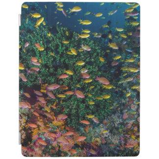 Écoles de bain de poissons en récif protection iPad