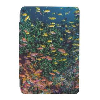Écoles de bain de poissons en récif protection iPad mini