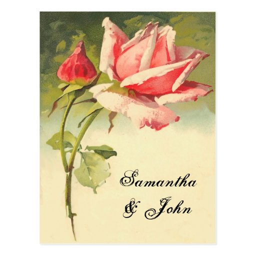 Économies de rose de cru la date cartes postales