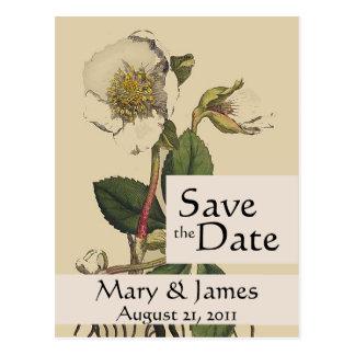Économies vintages de rose de Botanicals la carte