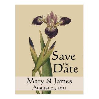 Économies vintages d'iris de Botanicals la carte