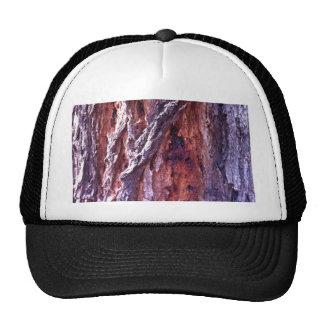 Écorce d'arbre mûre de gomme de séquoia en été casquette trucker