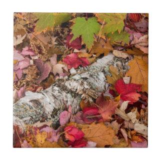 Écorce de bouleau de couverture de feuille petit carreau carré