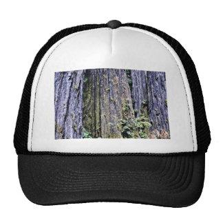 Écorce des arbres antiques de séquoia casquette