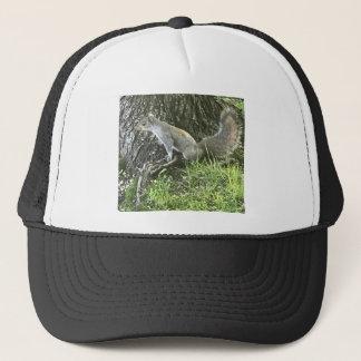 Écureuil à côté d'un arbre avec l'herbe verte casquette de camionneur