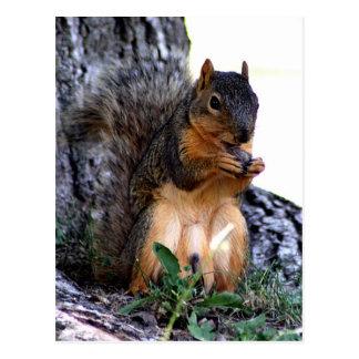 Écureuil Cartes Postales
