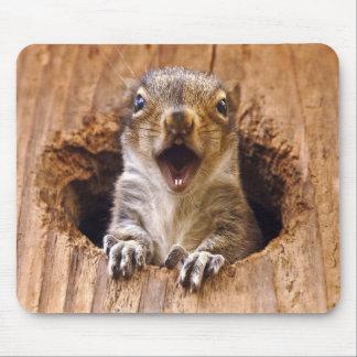 Écureuil choqué tapis de souris