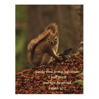 Écureuil - confiance cartes postales