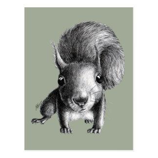 Écureuil curieux mignon cartes postales