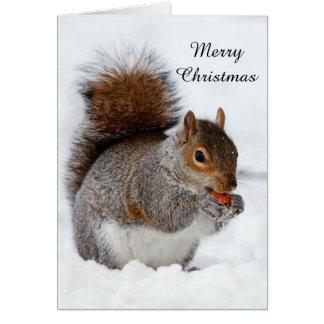 Écureuil dans la neige carte de vœux