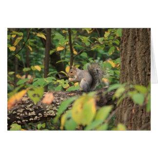 Écureuil dans le carte pour notes d'automne