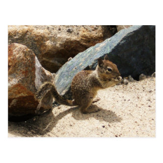 Écureuil de bébé cartes postales