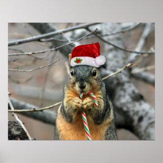 Écureuil de Noël Affiche
