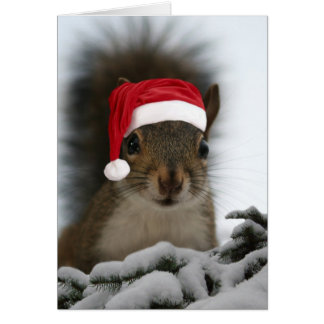Écureuil de Père Noël Carte De Vœux