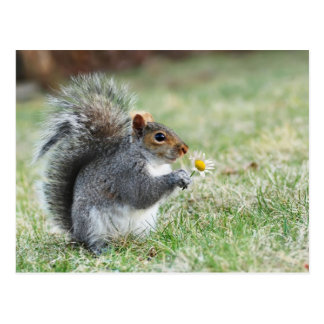 écureuil de sourire avec la marguerite carte postale