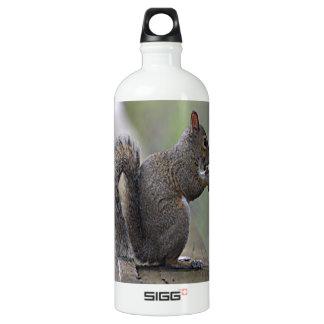Écureuil (gris)