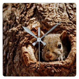 Écureuil gris dans une horloge de trou