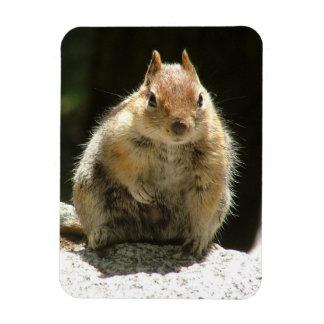 Écureuil humble magnet en vinyle