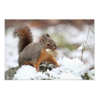 Écureuil mignon dans la neige avec l'arachide photo d'art