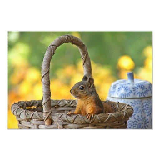 Écureuil mignon dans un panier photographes