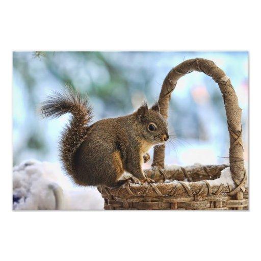 Écureuil mignon en hiver impressions photo