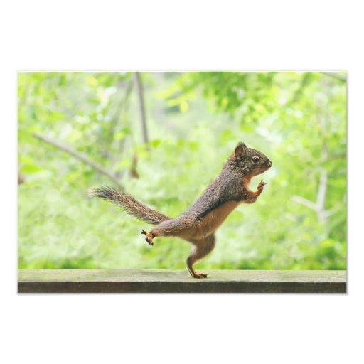 Écureuil mignon faisant le Chi de Tai Photographes