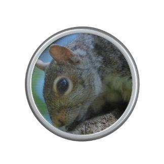 Écureuil mignon haut-parleur bluetooth