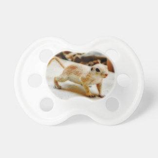 Écureuil moulu de bébé dans la tétine d'Orion