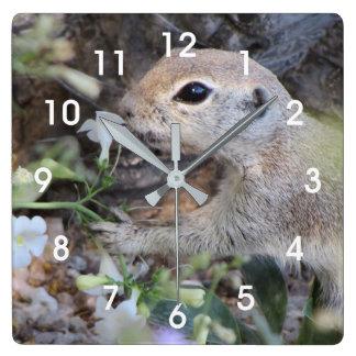Écureuil moulu de queue ronde sentant les fleurs horloge carrée