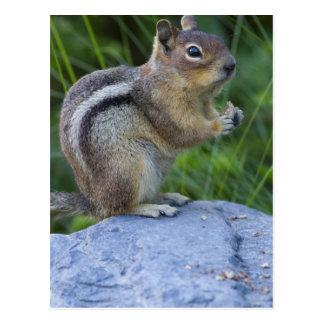 Écureuil moulu enveloppé d'or carte postale
