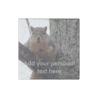 Écureuil regardant votre magnet de marbre