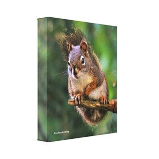 Écureuil rouge hardi dans le sapin toile