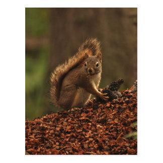 Écureuil rouge sur la pile de débris cartes postales