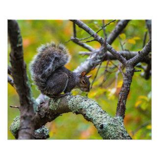 Écureuil sinistre pro papier de photo de 24 x de