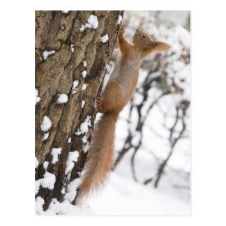 Écureuil sur l'arbre carte postale