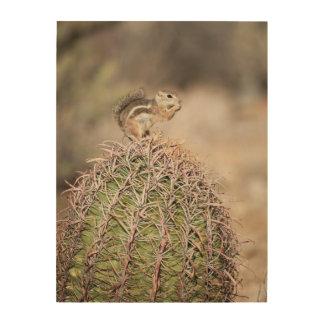 Écureuil sur le cactus de baril impression sur bois