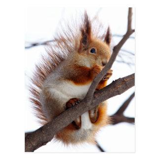 Écureuil velu rouge avec une noisette carte postale