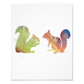 Écureuils Impression Photo