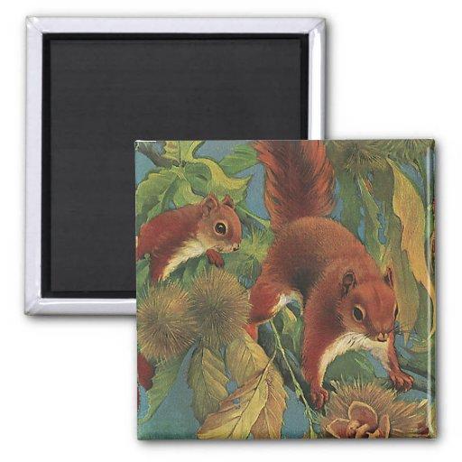 Écureuils vintages, animaux sauvages, créatures de aimants