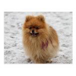 Edgrrrr #2 - Pomeranian Cartes Postales