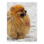 Edgrrrr #3 - Pomeranian Carte Postale