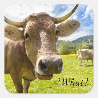 """Effronté """"ce qui ?"""" Vache Sticker Carré"""