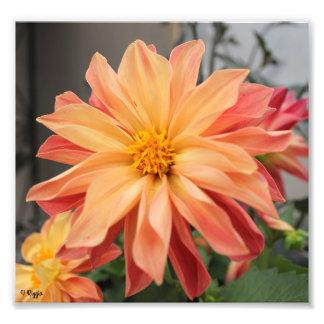 Élargissement de photo - fleur orange