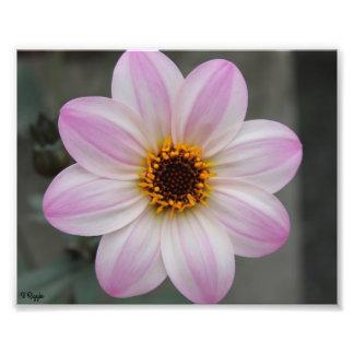 Élargissement de photo - fleur pourpre rose