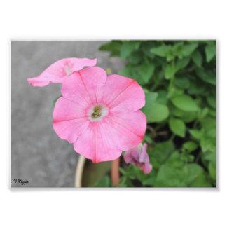 Élargissement de photo - fleur ronde rose