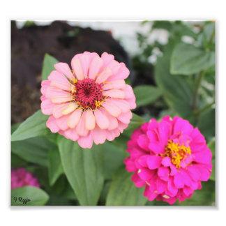 Élargissement de photo - fleur rose